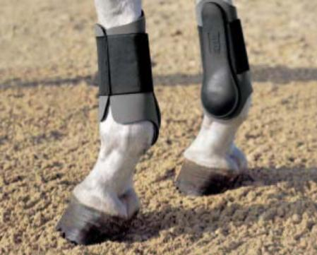 Neoprene tendon horse boots hind